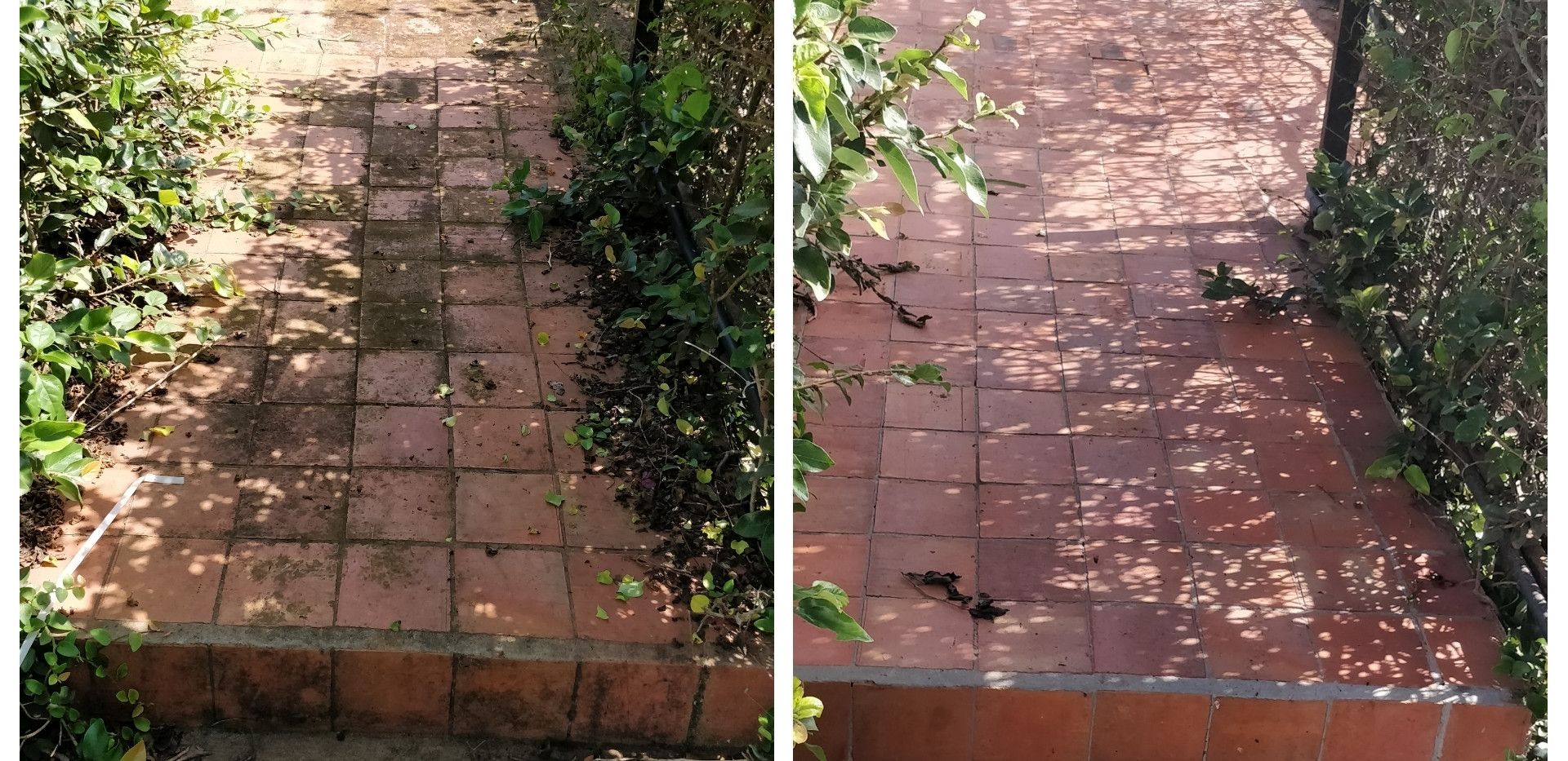 Terracota tile cleaning