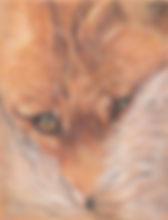 Zadravec_NestledFox.jpg