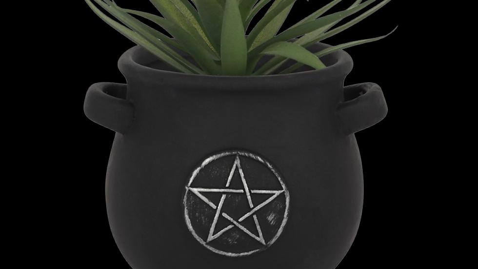 PENTAGRAM | Cauldron Plant Pot