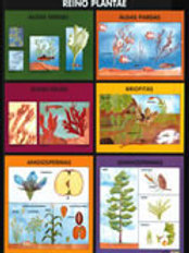 Poster -  Plantae Kingdom Ready To Hang: Póster Reino Plantae Con Bastón