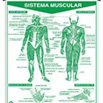 Erasable Muscular System: Plumoagua Sistema Muscular