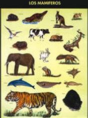 Poster - Birds/Mammals Ready to Hang: Póster Aves Mamíferos Con Bastón