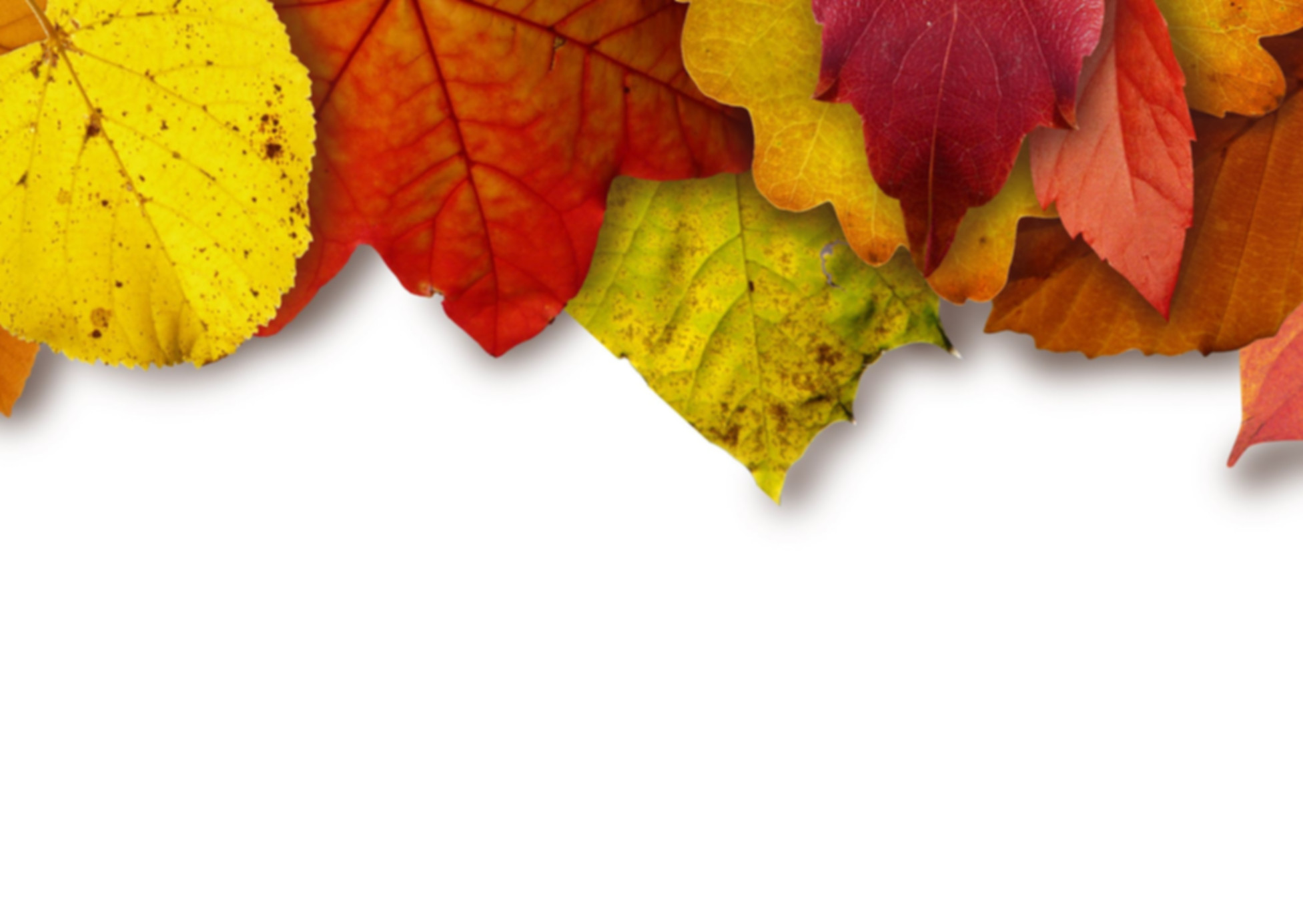 leaves-colorful-color-yellow-64732.jpeg
