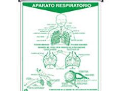 Erasable Respiratory System: Plumoagua Sistema Respiratorio