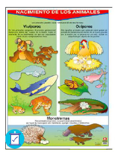 Birth (Animals) Poster