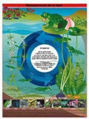 Poster Frog Metamorphosis: Poster Metamorfosis de