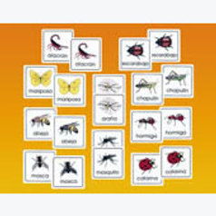 Memory Matching Game Insects: Memopares Insectos