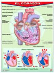 Poster The Heart Ready To Hang: Poster El Corazón