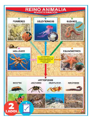 Animal Kingdom Invertebrates/Vertebrates