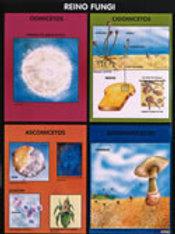 Poster - Fungi Kingdom Ready To Hang: Póster Reino Fungi  Con Bastón