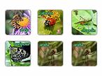 educatodo-memopares-memopares-de-insectos-20020180582551_1400x.webp
