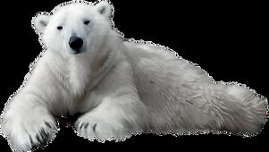 6-63617_polar-bear-png-clip-art.png