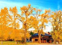 Willow Creek Cabins Fall