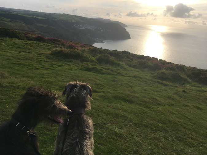 Rufus and Shadow looking at Lynmouth