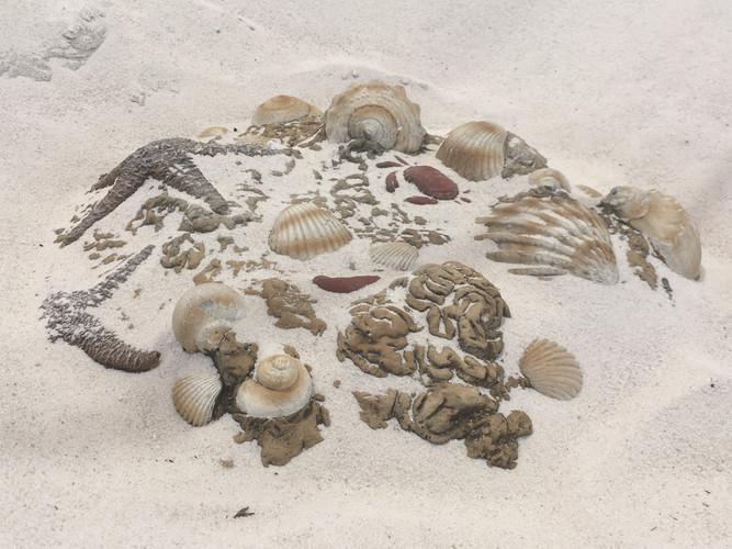 Fossil Dig. Sand Play. Optus Stadium