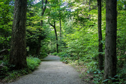Path to Inspiration Stump, Lily Dale