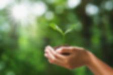 main-tenant-jeune-plante-nature-verte-fl