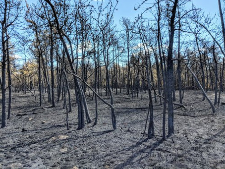 Resilience and recovery of a jack pine ecosystem after the 2018 Altona Flat Rock wildfire
