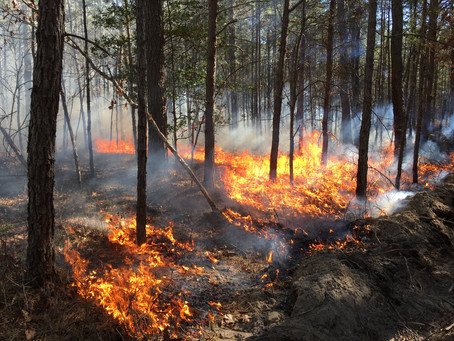 New Jersey Forest Fire Service – Science in Action