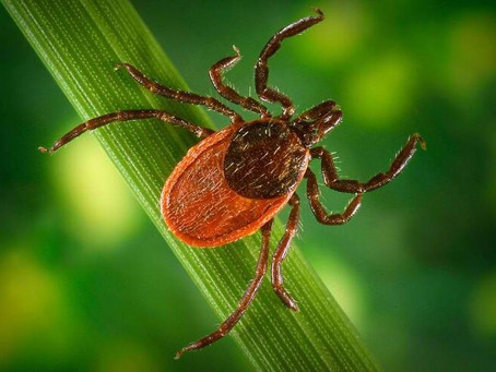 Webinar - Lyme disease ecology in a newly emerging hot spot & implications for beyond