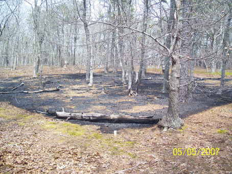 Managing Fuels in Northeastern Barrens: Manuel F. Correllus State Forest on Martha's Vineyard