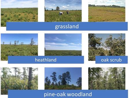 Vegetation Sampling Protocol for Xeric Habitats of the Northeast