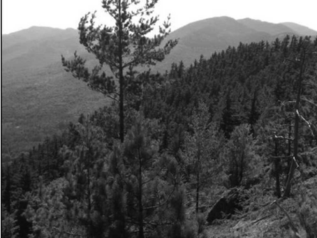 Research Brief: Discovering Red Pine Fire History in New England