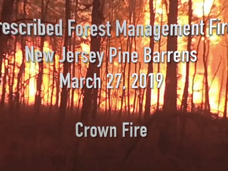 In the Eye of the Fire – 360° video of crown fire in NJ pinelands