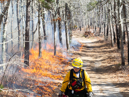 MassWildlife Habitat Grants Enabling Prescribed Fire Programs to Flourish on Municipal Lands