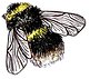 Bee for website opposite.png