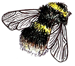 Bee for website copy.png