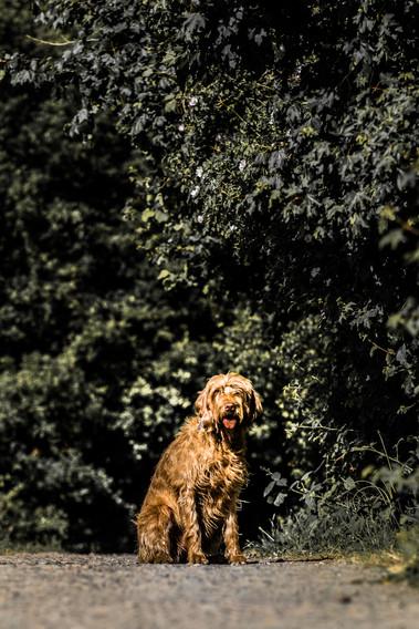 Dog pitctures-13.JPG