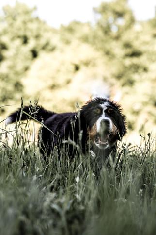 Dog pitctures-9.JPG