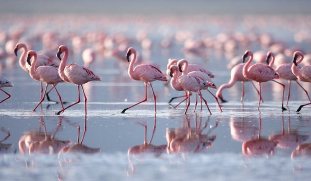 Are there Flamingos in Guardamar?