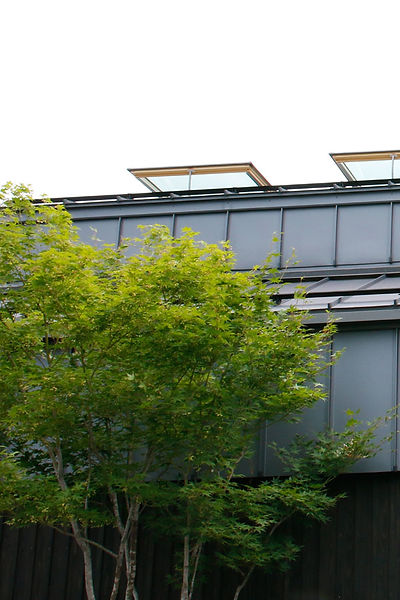 庭の植栽と天窓