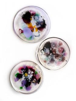 Fungal Petri Series