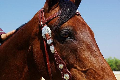 Cowboy Dressage Tests