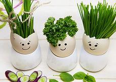 alimentation vegetarien vegetalien vegan josselin