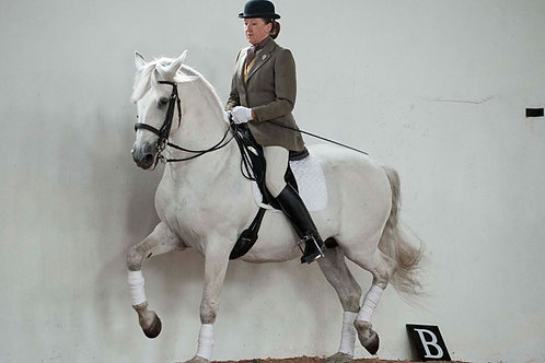 Classical Riding Club Dressage Tests