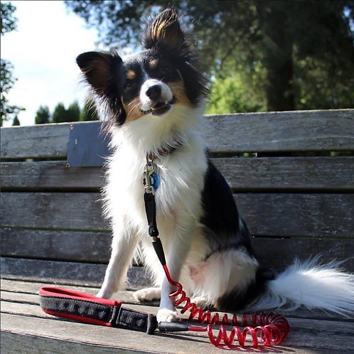 Ruff Life Junior Coil Leash