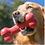 Thumbnail: Kong Goodie Bone
