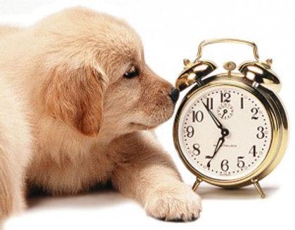 pup_clock-300x234.jpg