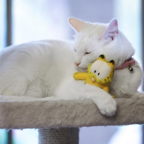 Multipet Garfield Catnip Toy