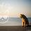 Thumbnail: Surf Cat Collars (Breakaway)