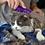 Thumbnail: Kong ZoomGroom Cat