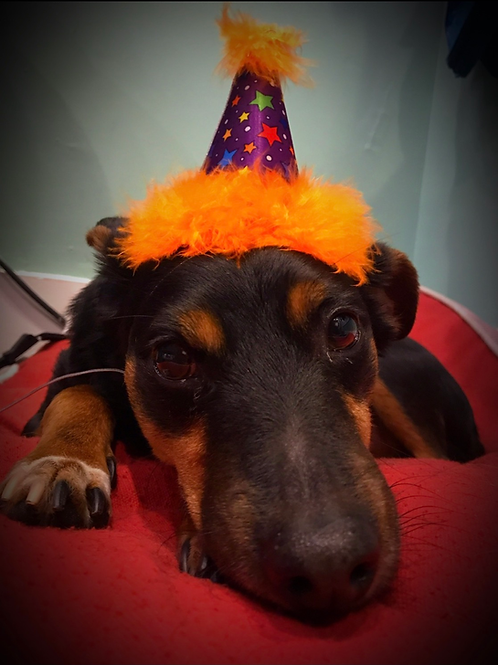 Birthday Party Hats!  (2 sizes)