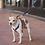 Thumbnail: Mountain Dog 4 Foot Mini Leash