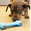 Thumbnail: Kong Puppy Goodie Bone