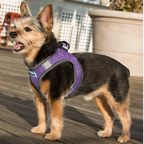 Baydog Liberty Bay Harness