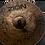 "Thumbnail: Zion - FX Legend 14"" HiHat"
